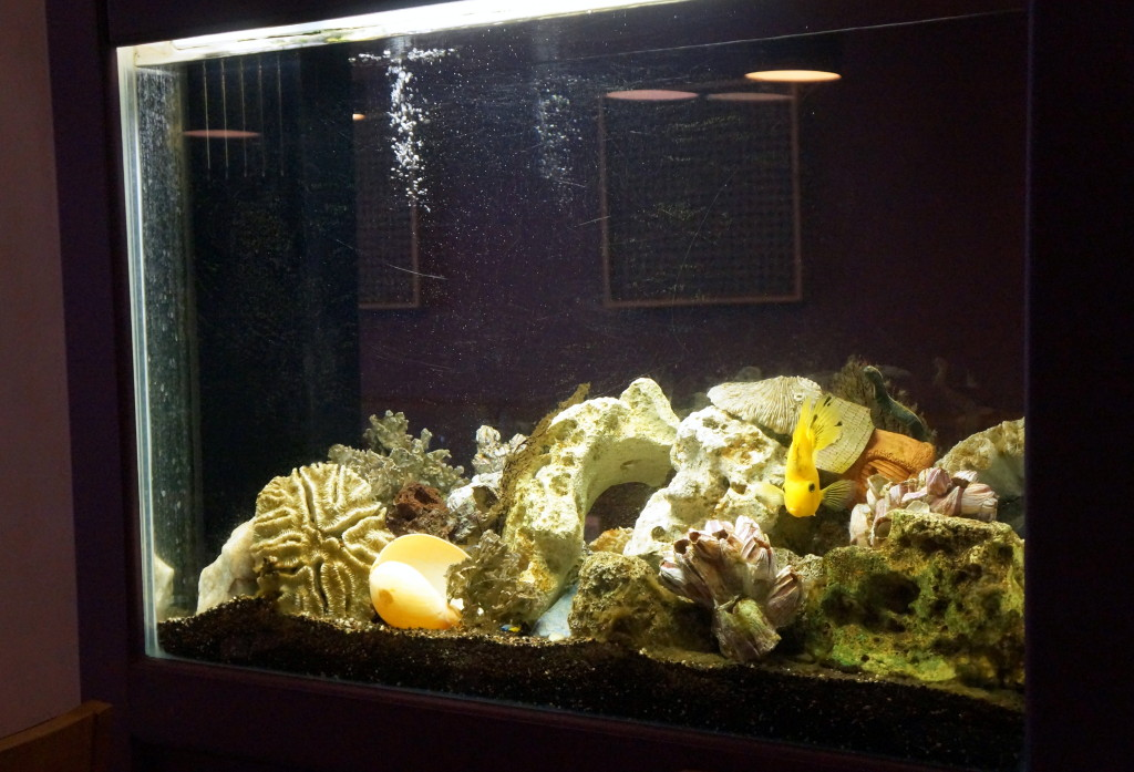 Fish Tank - Anarkali Restaurant